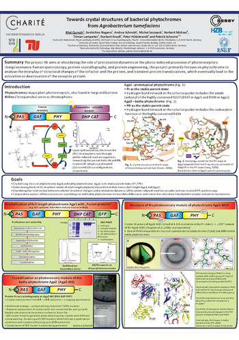 Award-Winning Poster by Dr. Bilal Qureshi (project B6 / AG Scheerer):  Towards crystal structures of bacterial phytochromes from Agrobacterium tumefaciens (Bad Schandau, 2014)